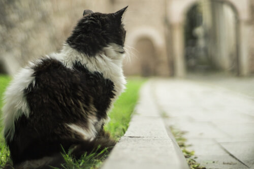 Documental Kedi de gatos