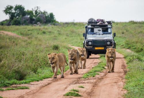 Dónde ir de safari