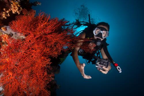 Dónde se encuentran los arrecifes de coral