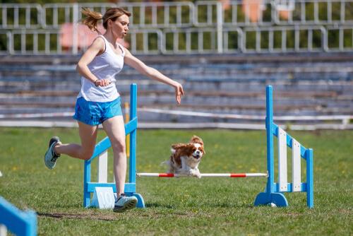 Ejercicios de agilidad para perros