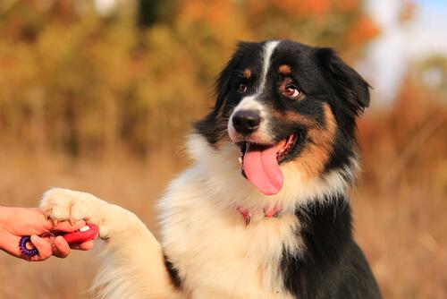 Actividades para ejercitar y educar a tu mascota