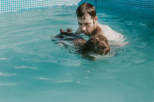 Enseñar a perro a nadar