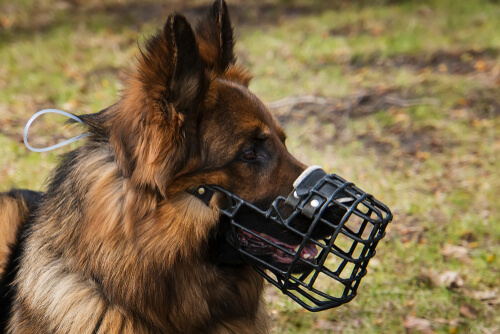 Consejos para escoger bien el bozal de tu perro