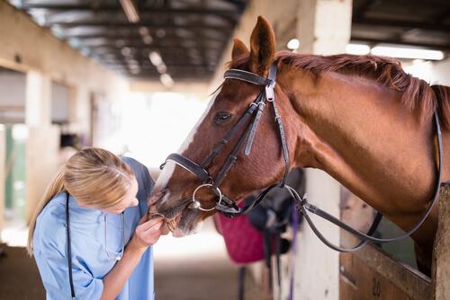 Especialista en caballos