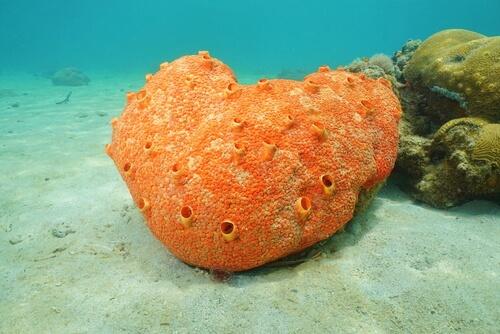Todo lo que debes saber sobre las esponjas marinas