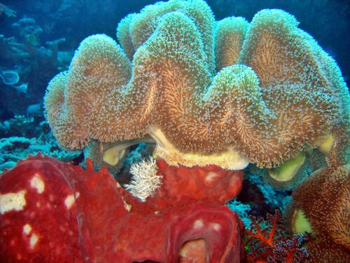 Esponjas marinas: tipos
