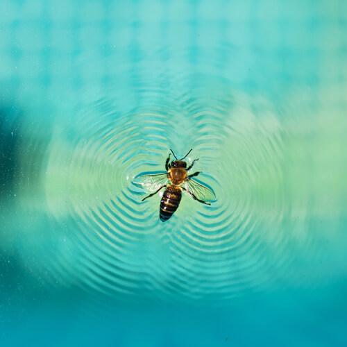 Cómo evitar insectos en tu piscina de casa