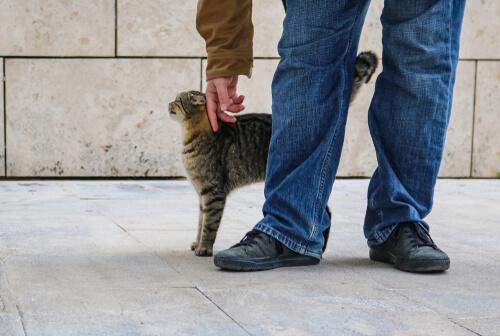 Información sobre las feromonas felinas