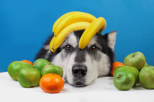 Frutas de verano para tu perro