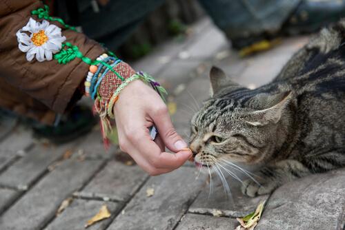 Cómo ganarse la confianza de un gato callejero