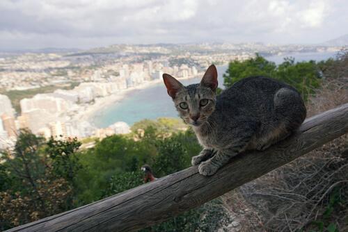 ¿Tiene tu gato miedo a las alturas?