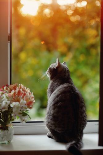 Gatos: mitos y leyendas