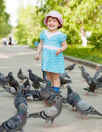 Infecciones que transmiten las palomas