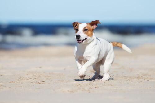 Tips para ir a la playa con tu perro