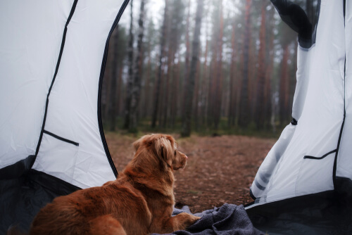 Puis-je faire du camping avec mon chien?