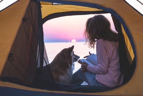 Ir de camping con mi perro