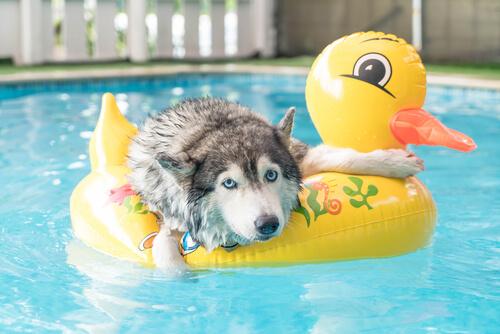 Tips para jugar con tu mascota en verano