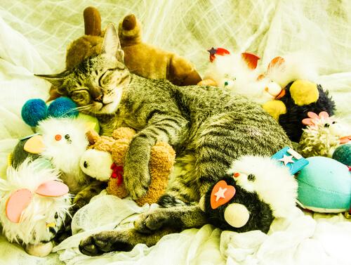 Los mejores juguetes para felinos