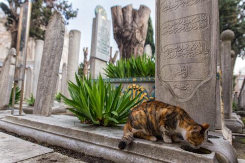 Conoce Estambul: la ciudad de los gatos