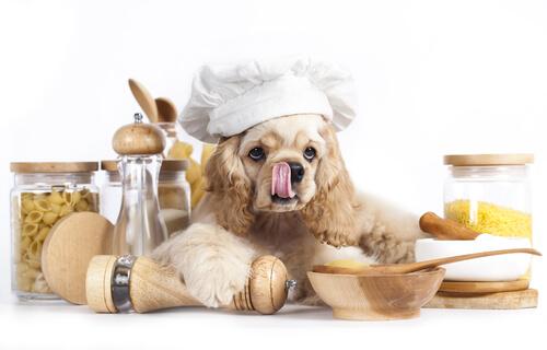La pasta y los perros