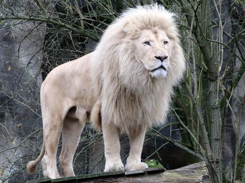 5 animales salvajes que nunca habías visto