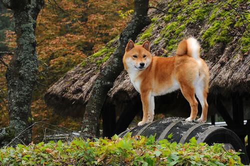 Localización de los primeros perros de América