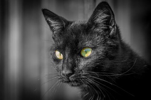Información sobre los ojos de los gatos