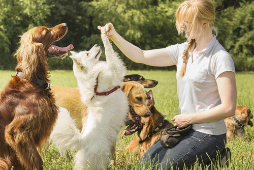 Los perros suelen resolver problemas más rápido cuando sus dueños los alientan