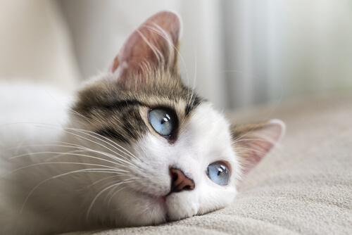 Mirada de los gatos