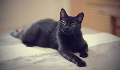 El mito del gato negro