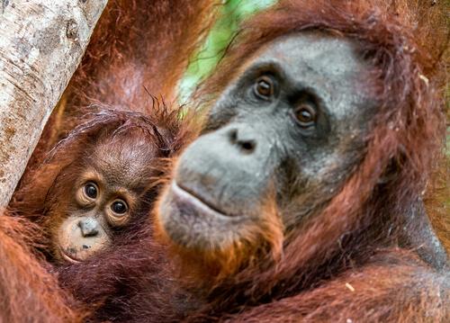 Monos: personas no humanas