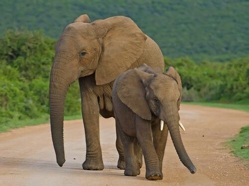 Parque nacional de los Elefantes de Addo