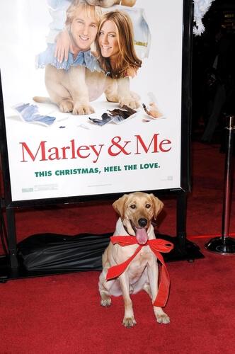 Película Marley y yo
