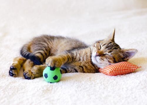 Pelotas de goma para gatos