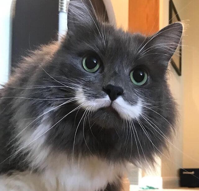 Perfiles de Instagram sobre gatos