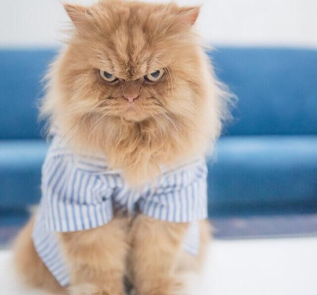 Los perfiles de Instagram sobre gatos más famosos