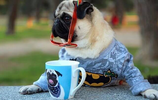 Perfiles de Instagram sobre perros