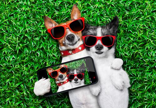 Los perfiles de Instagram sobre perros más famosos