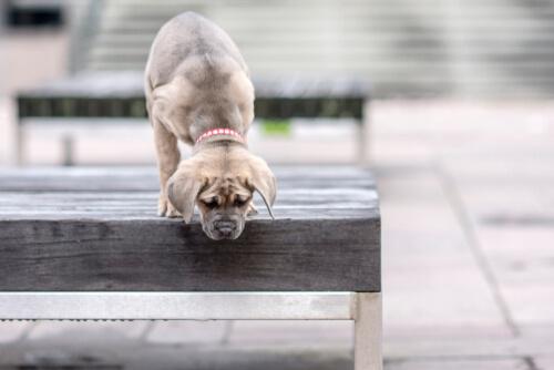¿Perros con miedo a las alturas?