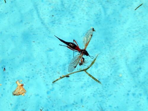 Piscina llena de insectos