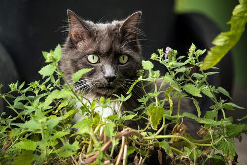 Plantas dañinas para gatos