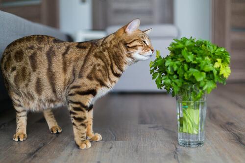 Plantas perjudiciales para gatos