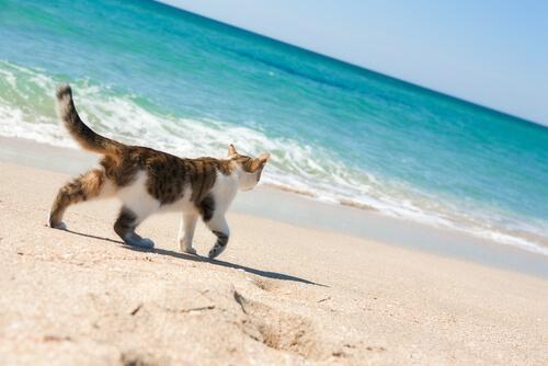 ¿Hay playas para gatos?