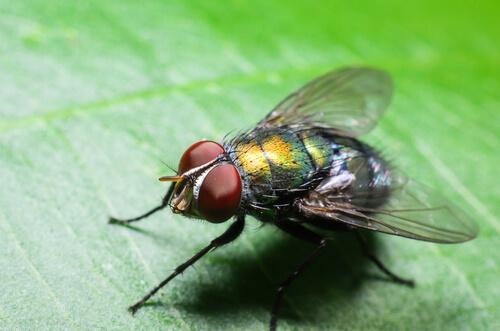 ¿Por qué hay más moscas en verano?
