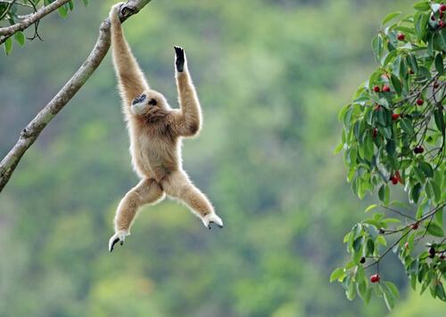Un primate extinto aparece en una tumba real