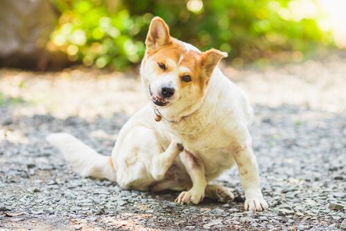 ¿Cómo prevenir los parásitos en perros y gatos?