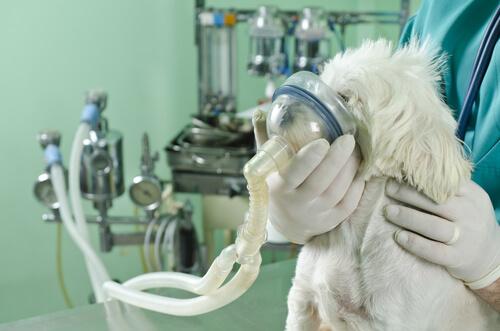 Qué hacer ante los problemas respiratorios de los perros