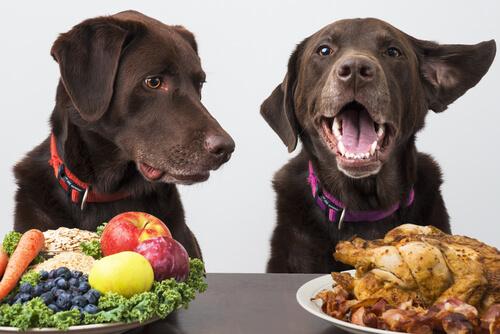 ¿Puede un perro ser vegano?