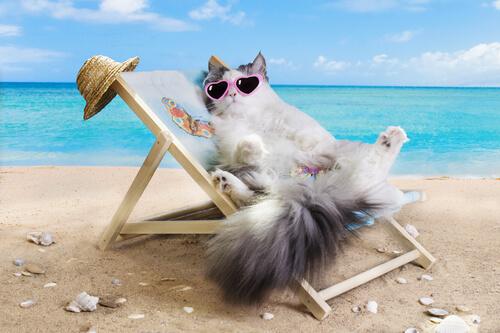¿Puedo llevar a mi gato a la playa?