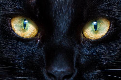 El funcionamiento de las pupilas en perros y gatos